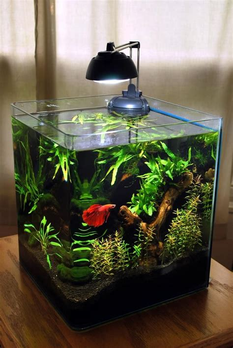 betta fish tank light planted 6 gallon eheim rodstewart on plantedtank net