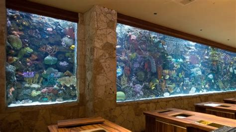 hotel room with aquarium wall 7 hotels with awe inspiring aquariums abc news