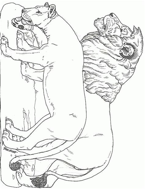 male lion coloring pages lion coloring pages coloringpagesabc com