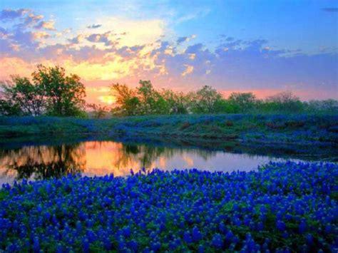 immagini paesaggi fioriti paesaggio fiorito immagini e foto gratuite