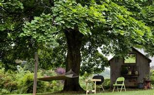 best shade of nice shades 7 fast growing shade trees to slash your