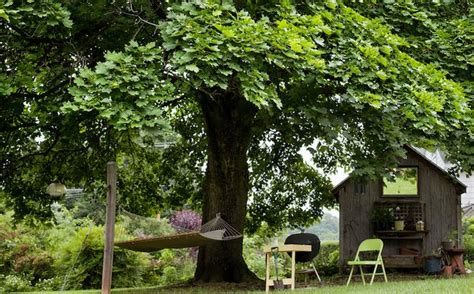 good shade trees for backyard nice shades 7 fast growing shade trees to slash your