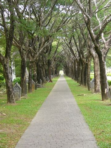 walkway under trees