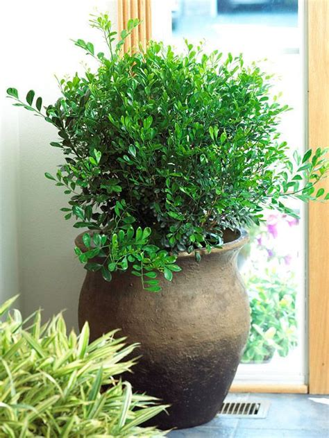 houseplants for low light areas foliage plants orange and plants on
