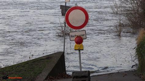 neufundländer sucht zuhause k 246 ln bereitet sich auf das hochwasser am rhein vor 05 01