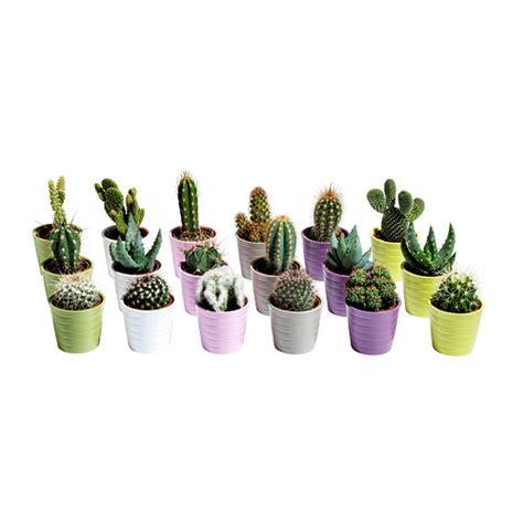 vasi giardino ikea vasi ikea per giardinaggio
