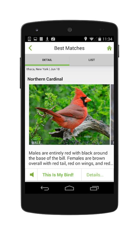 merlin bird id by cornell lab of ornithology android