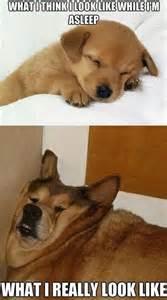 black friday mattress look like dog meme funny dirty jokes memes amp pictures