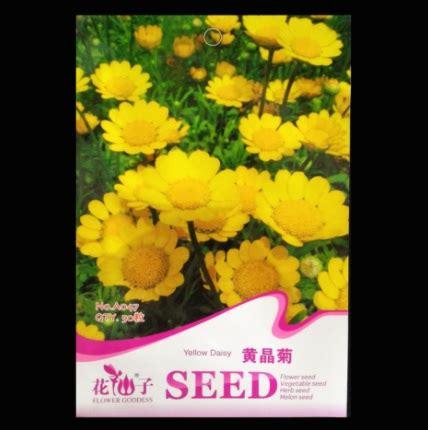 Benih Kuning Import Yellow Strawberry Yellow benih yellow 50 biji retail asia bibitbunga