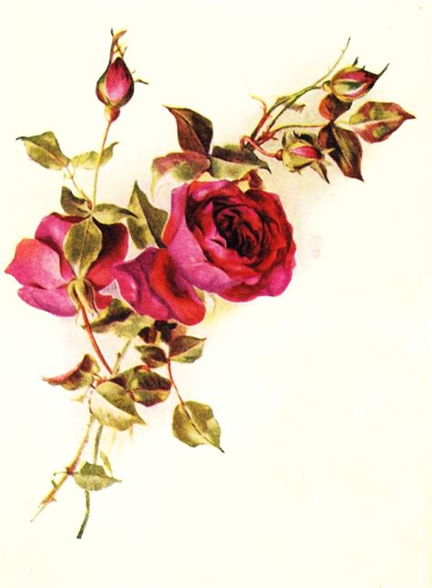 border rose tattoo 99 best flower border vector decoupage transfer images