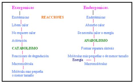 reacciones exotermicas y endotermicas biologia 1 cibertareas biologia