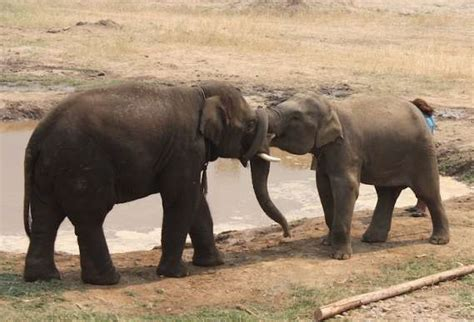does lincoln park zoo elephants from suffering to sanctuary zoos aquariums center