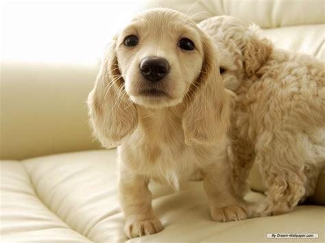Mini Encyclopedia Dogs Explore The Wonderful World Of Dogs Ency Min o maravilhoso mundo dos animais ra 231 as de cachorro
