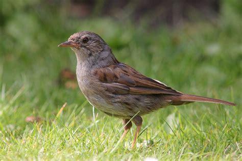 Garden Birds by Birds