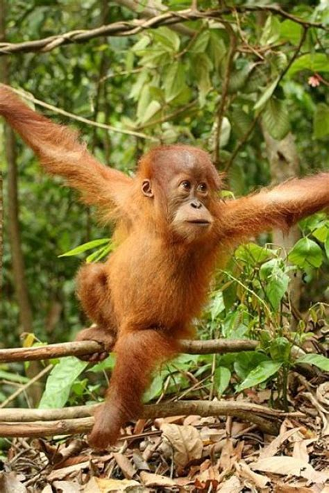 animals and plants that live in the tropical rainforest tropical rainforest birds and animals just for