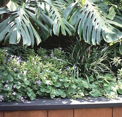 gr npflanze gro e bl tter tipps f 252 r gro 223 e landschaft auf kleiner garten fl 228 che