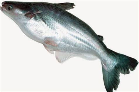 Ikan Dori pin rasa on