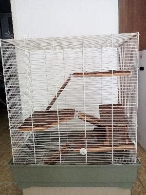 gabbia per scoiattoli gabbia per scoiattoli posot class