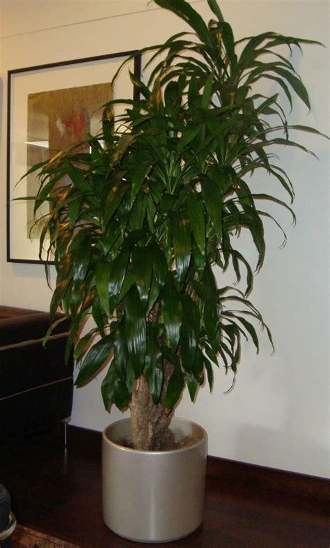 Imagenes De Plantas Verdes De Interior | plantas de interior resistentes 10 ideas y consejos