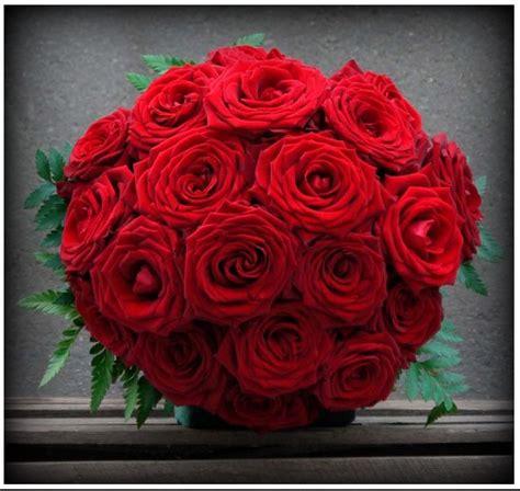 imagenes de rosas hermosas unicas imagenes de las rosas mas bellas del mundo para compartir