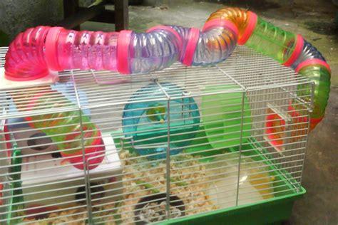Hamster Berikut Kandang perawatan hewan