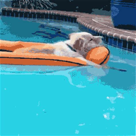 pool rafts for dogs dogs on pool floats intheswim pool
