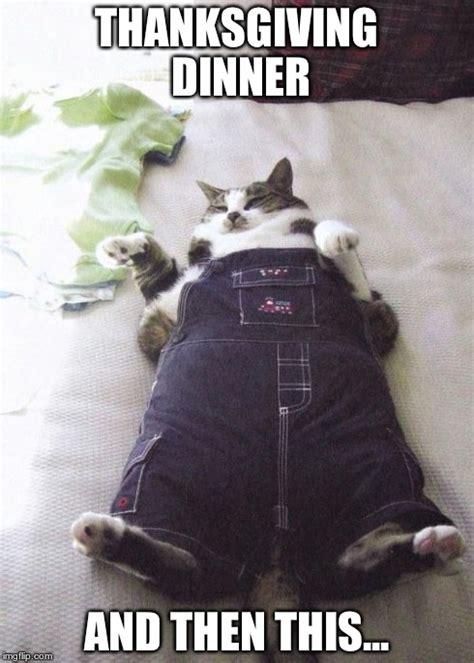Thanksgiving Cat Meme - fat cat meme imgflip