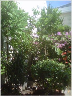 desain  tata letak tanaman hias  taman rumah