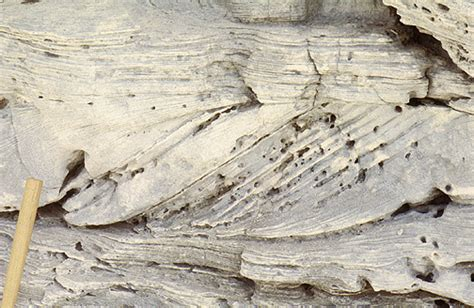 cross bedding definition cross bedding