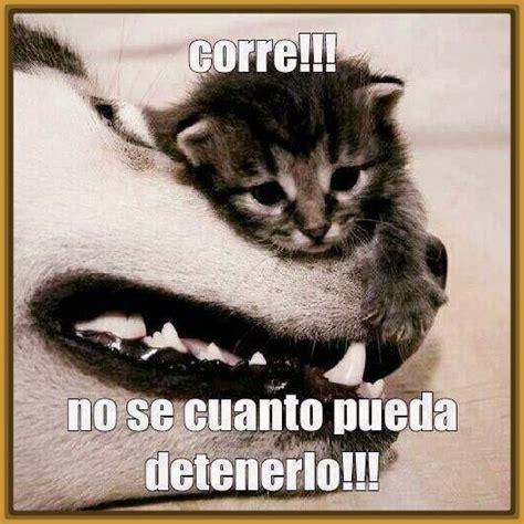 imagenes con memes y frases imagenes de gatos con frases chistosas archivos gatitos