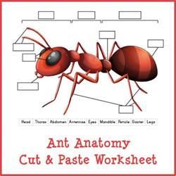 ant anatomy cut amp paste worksheet gift of curiosity