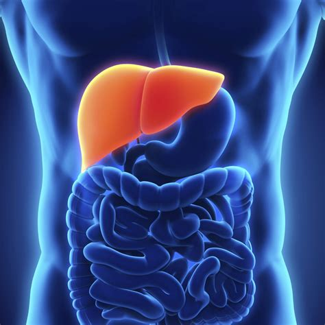 diseases of the liver american liver foundation