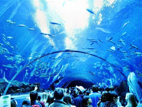 Types Of Aquarium by Beautiful Atlanta Georgia