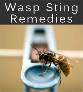 bee sting relief home remedies wasp stings treatments home remedies survival kit 72