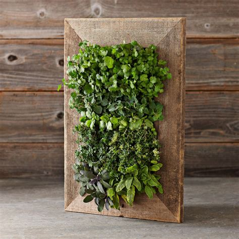 reclaimed barn door vertical wall planter the green head