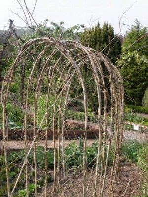 Garden Arch Norwich It S National Beanpole Week News Taverham Nursery
