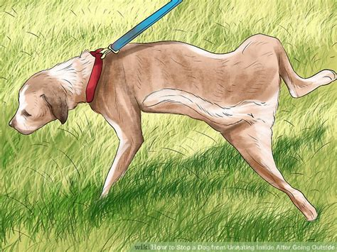 how to stop a dog from peeing inside the house 3 ways to stop a dog from urinating inside after going outside