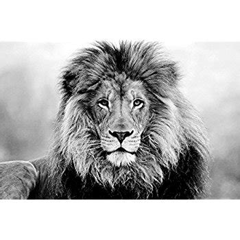 lion print black and white lion face www pixshark com images galleries with a bite