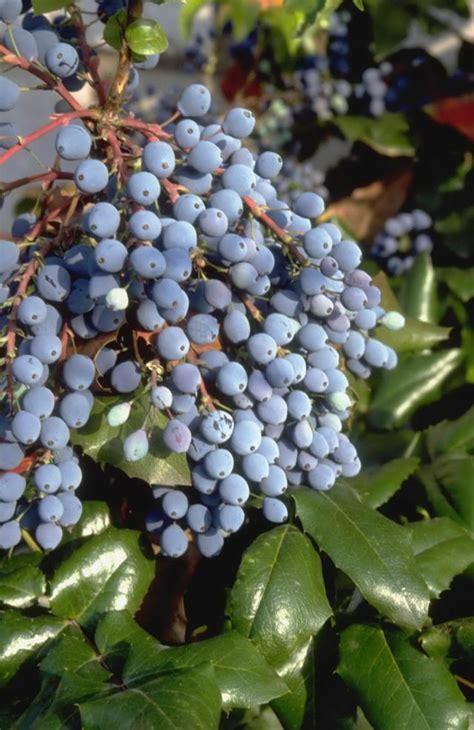 Pflanzen F R Hecke 640 by Fruchtschmuck F 252 R Einen Sch 246 Nen Garten Im Herbst Garten