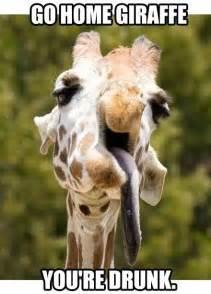 Giraffe Birthday Meme - giraffe meme go home giraffe picsmine