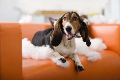 natural deterrent   dogs  dog