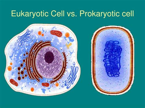 section 7 2 eukaryotic cell structure pages 174 181 ppt chapter 7 cell structure and function powerpoint