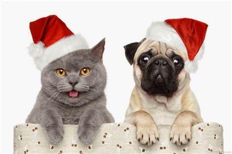 imagenes de animales navidad preciosos wallpapers de animales navide 241 os todo mascotas