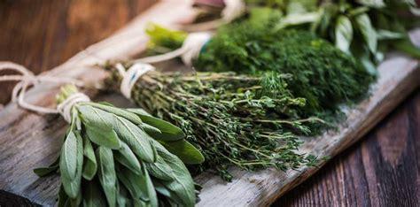 herbs learn  basics
