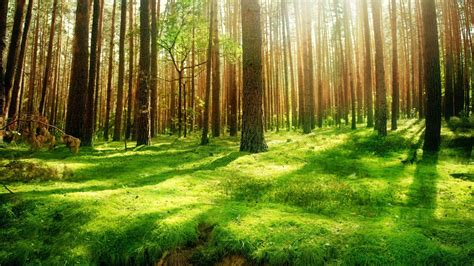 background images forest background images wallpapersafari
