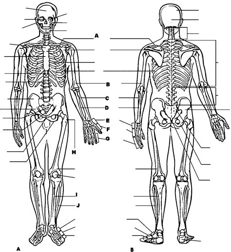 anatomy and physiology coloring workbook answers page 182 anatomy and physiology free coloring pages coloring home