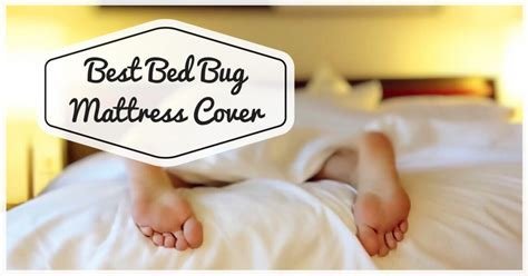 best bed bug mattress cover best bed bug mattress encasement cover pest survival guide
