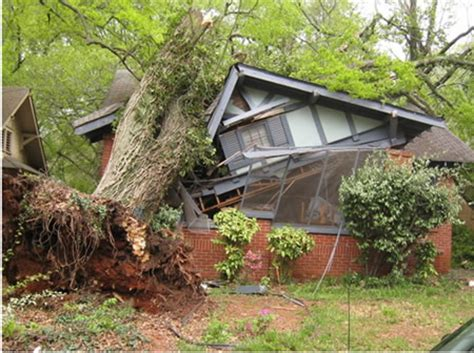 tree falls on house insurance my neighbor s tree fell on my house whose home insurance covers this