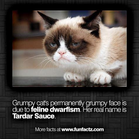 Cat Facts Meme - the cat featured in the popular internet meme quot grumpy cat