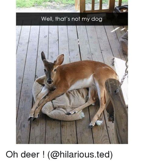 deer memes deer memes of 2017 on sizzle out